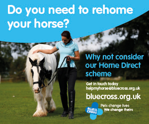 Blue Cross 2020 A (Lancashire Horse)
