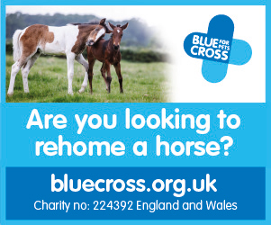 Blue Cross 2020 B (Lancashire Horse)